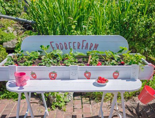 Upcycling-Projekt: Erdbeerfarm